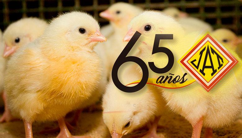 Tamaño correcto de las partículas de alimento para aves