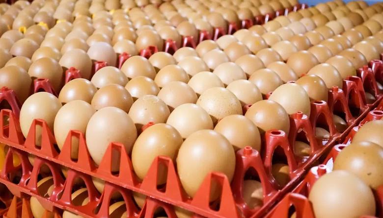 Precio del huevo llega a 31 pesos  el kilogramo en Puebla