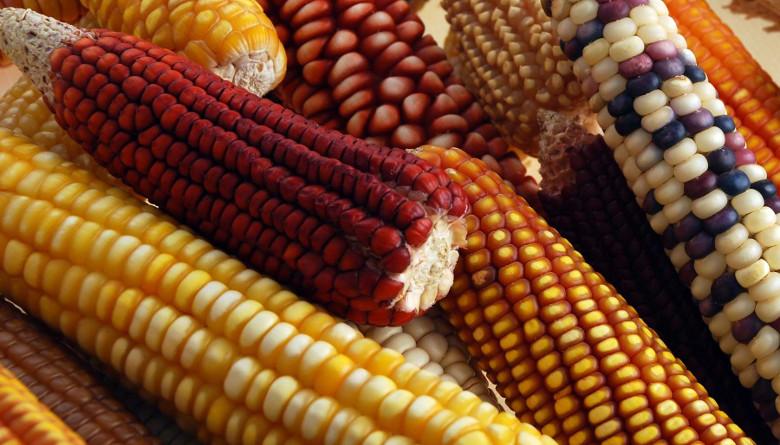 Situación actual del maíz