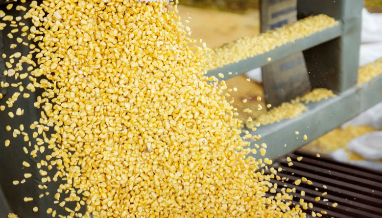 Situación actual del mercado del maíz