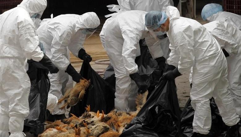 Se reportan dos focos de Influenza Aviar en Guanajuato y Querétaro