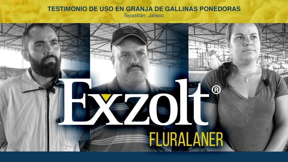 Exzolt® de MSD: Testimonio de Uso en Granja de Gallinas Ponedoras