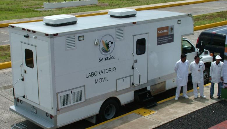 Detectan enfermedad de Newcastle en Sonora