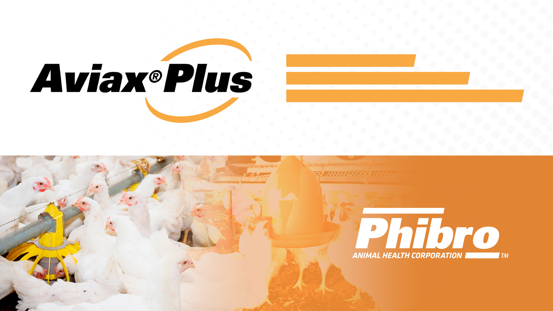Conoce Aviax Plus, un producto eficaz contra la coccidiosis aviar