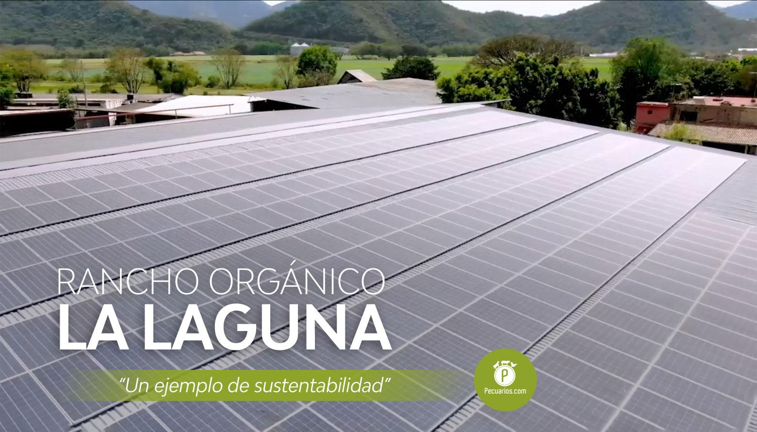 Rancho Orgánico La Laguna, buscando un camino hacia la sustentabilidad pecuaria